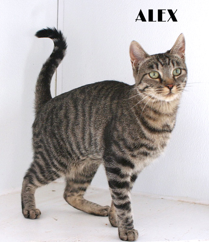 Rare Cat Breeds Access to all cat breeds Rare Domestic Cats