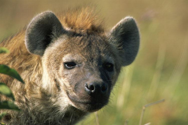 Exotic Animal Rentals Elephants Cheetah Giraffe Hyenas More