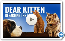 see hollywood animals animal actors in action films television